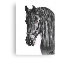 Black Pearl - Friesian Stallion Canvas Print