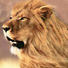 Male African Lion by Walter Colvin