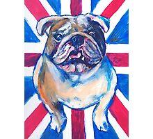 British Bulldog Photographic Print
