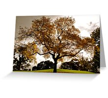 Lone tree, Flagstaff Gardens, Melbourne Greeting Card