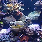 Aquarium - Tropical Coral Reef - Townsville by Anthony Ogle