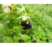 Bumbling Bumble-Bee Photographic Print