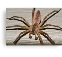 Scary Nursery Web Spider. Canvas Print