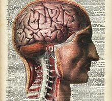 Vintage Human Brain Anatomy by DictionaryArt