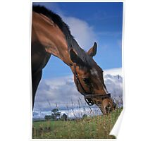 Portrait of a horse. Poster