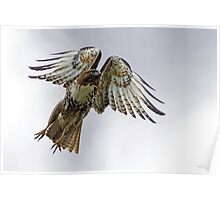 Red Tail Takeoff Poster