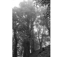 Woodland Photographic Print