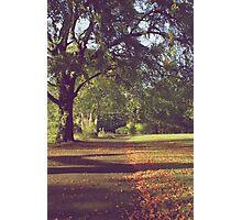 Vintage pathway Photographic Print