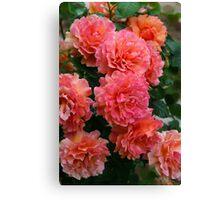 Peachy Rose Faces Canvas Print