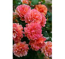 Peachy Rose Faces Photographic Print