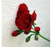 Wallflower / Muurblommetjie Photographic Print