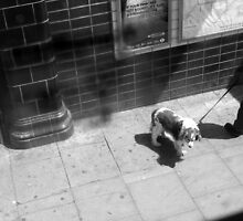LONDON: VIEWS FROM THE TOP DECK PT 4 'PUPPY POWER' by Redtempa