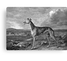 Greyhound Black and White Illustration Canvas Print