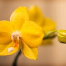 Yellow Orchid by Simon Marsden