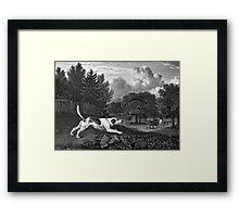 Harrier Dog Old Art Framed Print
