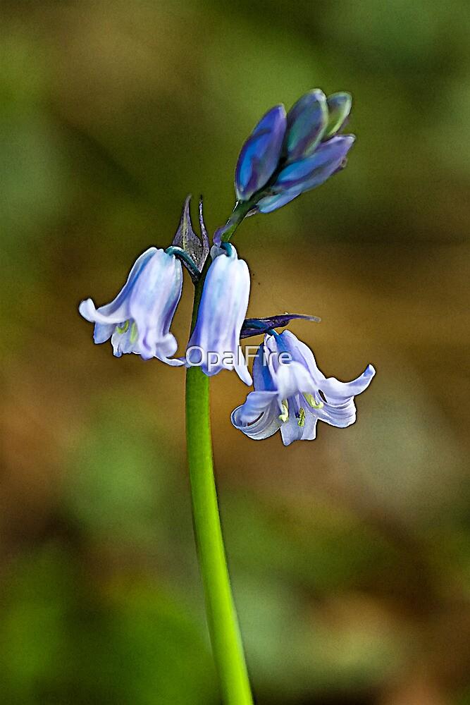 Bluebells by OpalFire