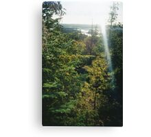 Conifer Forst Canvas Print
