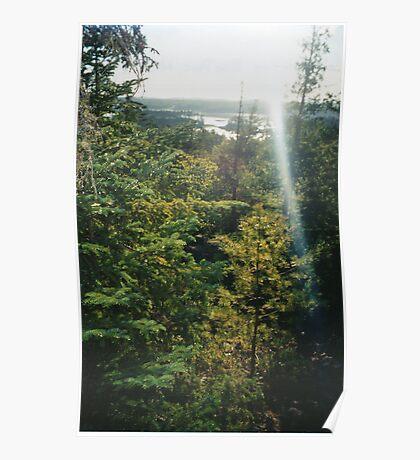 Conifer Forst Poster