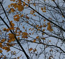 The sky is full of branches by lucyprest