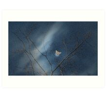 Cottonwood -  Late Evening, Early Spring  Art Print