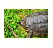 Young Snapping Turtle Art Print