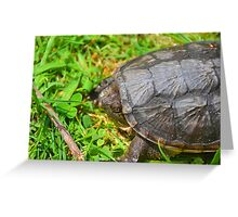 Young Snapping Turtle Greeting Card