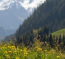 Alpine Meadow by Walter Quirtmair