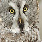 Great Grey Owl by Lindie