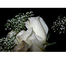 Delicate Rose Bloom Photographic Print