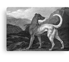 Irish Greyhound Dog Canvas Print