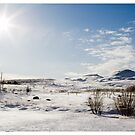 The End of the Line, Mosfellsbær (Iceland) by Madeleine Marx-Bentley