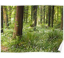 Glenarm Forest, County Antrim, Northern Ireland Poster