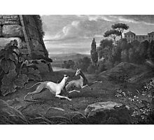 Italian Greyhounds Dog Drawing Photographic Print