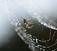 """"""" Festooned In Light """" by Richard Couchman"""