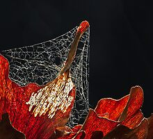 Lace on Lace by Lianne Wooster