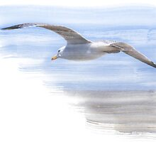 Seagull in Flight by Andy Coleman