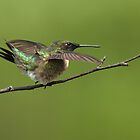 Landing Pose by Bill McMullen