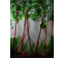 Last rays of light thru the trees, watercolor Photographic Print