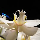 White orchid by iheartrhody