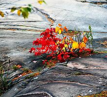 Dash Of Red And Gold by Debbie Oppermann
