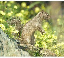 Squirrel portrait Photographic Print