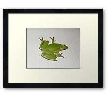 Green Tree Frog - Hyla cinerea Framed Print