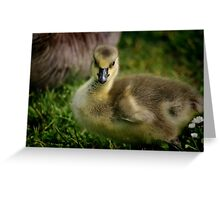 Little Goose Greeting Card