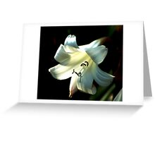 Queen Lily Greeting Card