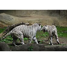 Issues - Cincinnati Zoo Photographic Print