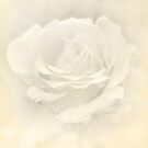 Soft white rose by Patrick Reinquin