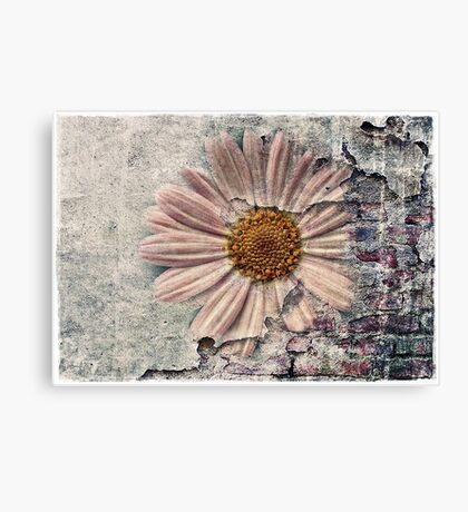 Another Decayed Flower! Canvas Print