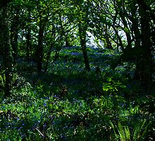 ~ Blue bell woods by moor2sea