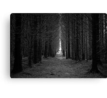 Langamull Forest 01 - Sitka Spruce Avenue Canvas Print