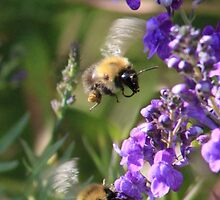 Late summer pollinators by missmoneypenny